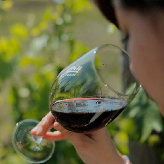 Poggio Stenti - Produttore di Vini Montecucco DOC e DOCG